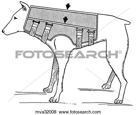 Stock Illustration of Neck brace, canine mva32008.