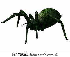 Brachypelma Illustrations and Clip Art. 12 brachypelma royalty.