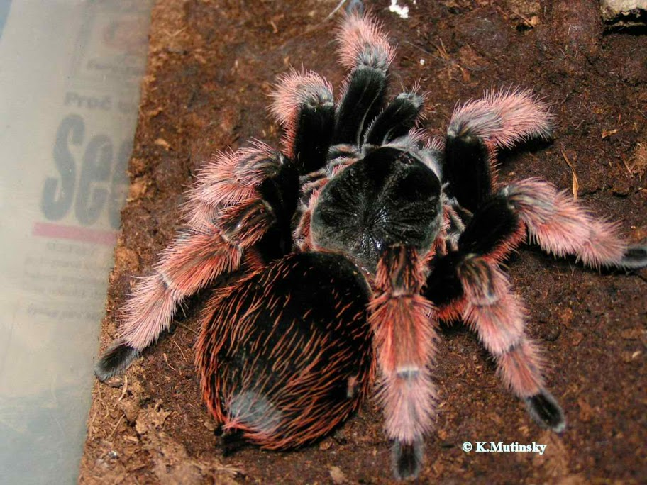 January 2013 ~ Tarantula Hub.