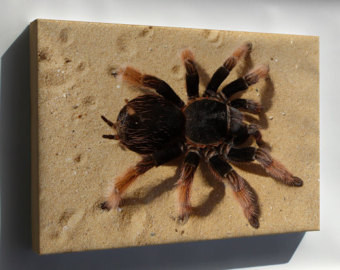 Items similar to Swarovski Crystal Tarantula Taxidermy on Etsy.