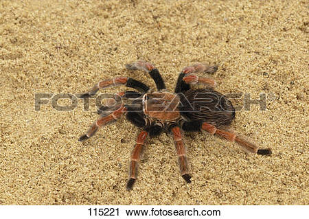Stock Photography of bird eating spider.