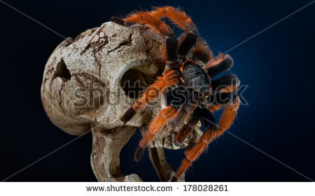 Pedipalp Stock Photos, Royalty.