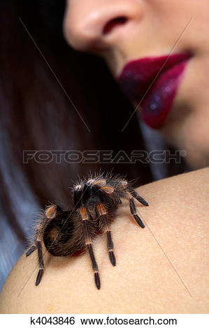 Stock Images of spider Brachypelma smithi on girl's shoulder.