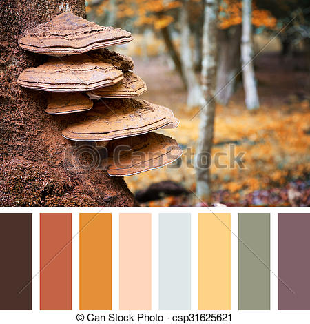 Stock Photo of Bracket fungus palette.