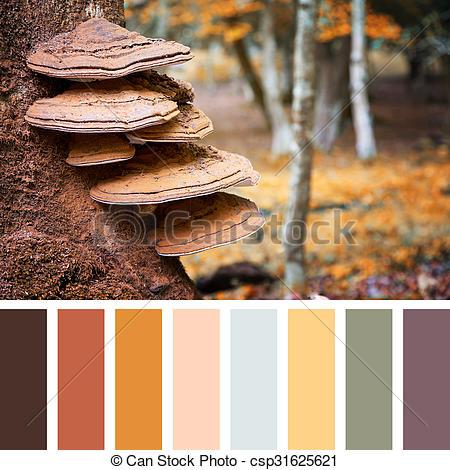 Stock Photo of Bracket fungus palette.