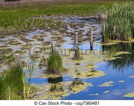 Stock Photography of Brackish Swamp.