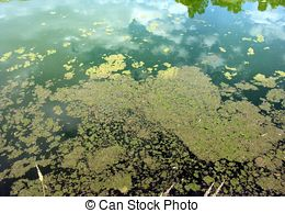 Stock Image of Algae polluted water in brackish water during.