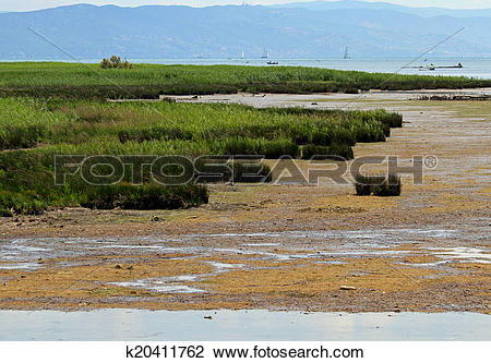 Stock Photo of Marsh with brackish water and reeds at the water's.
