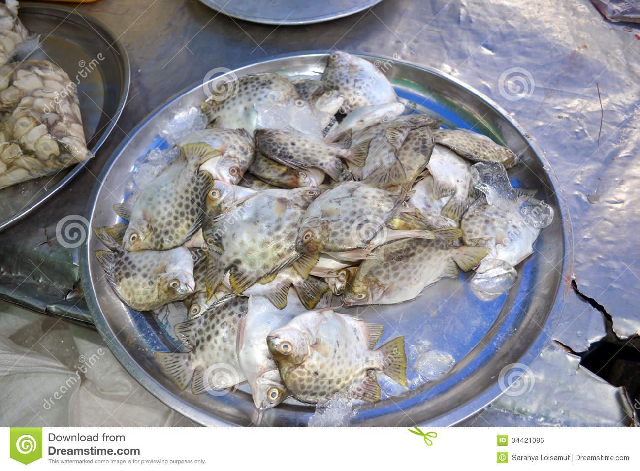 Fish Royalty Free Stock Image.