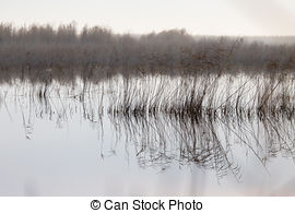 Stock Image of Marsh with brackish water and reeds at the water's.