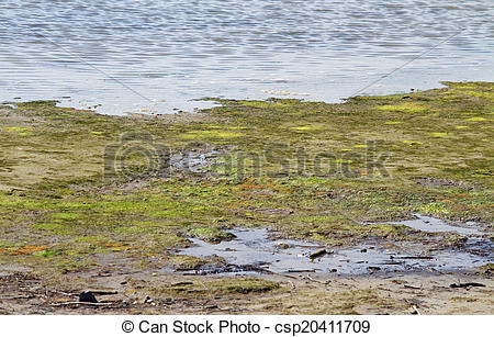Stock Photography of Marsh with brackish water in an area of.