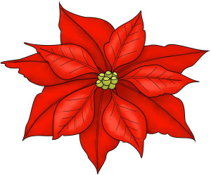 Poinsettia, everything you wanted to know..