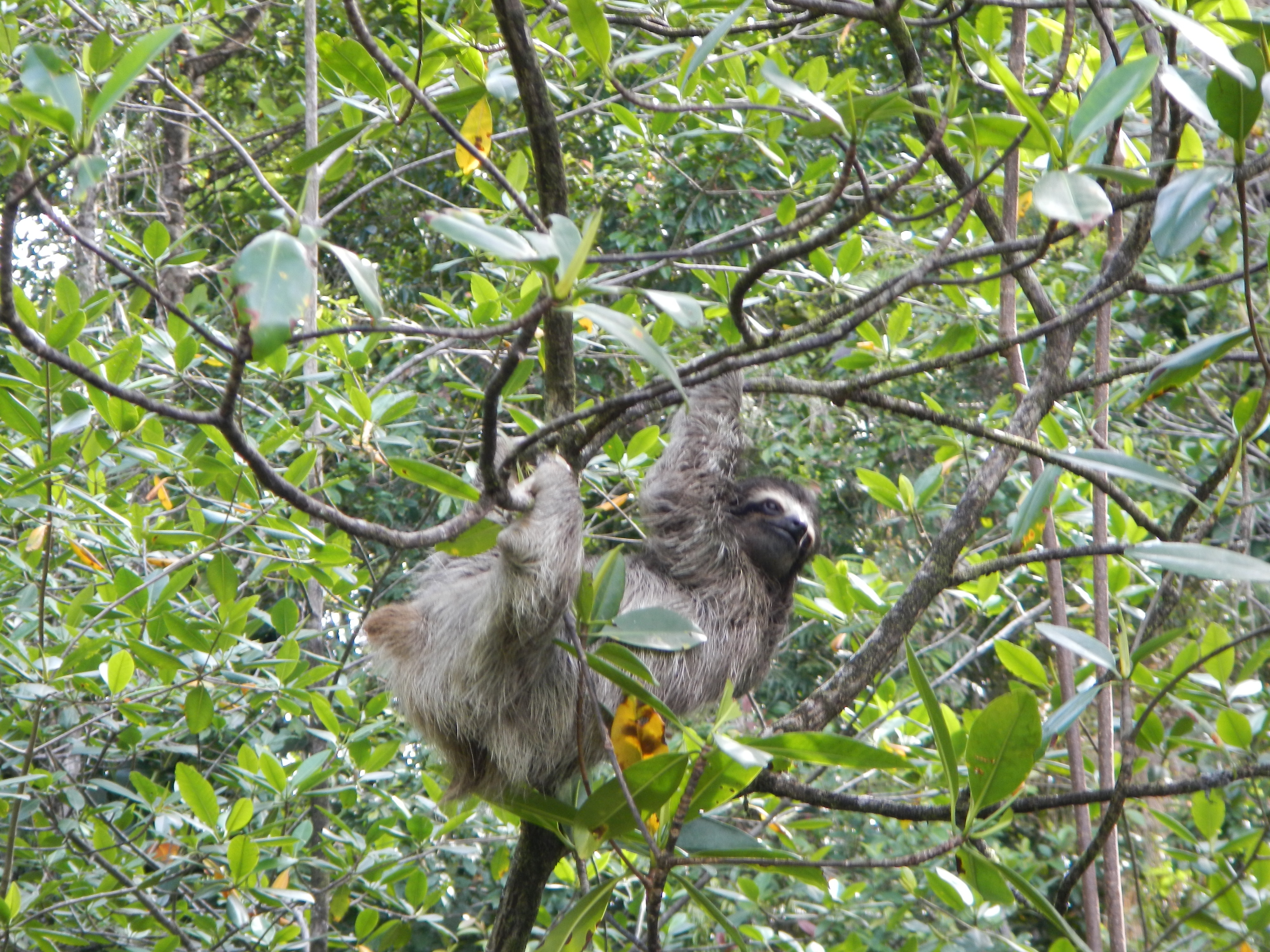Sloths.