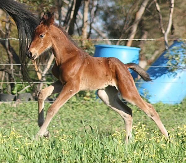 Foal Brag :).