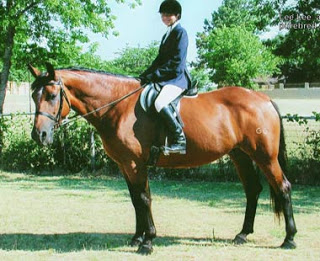 Check Out This Horse!: February 2010.