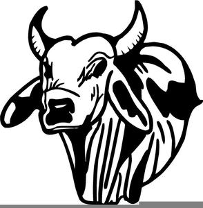 Brahma Bull Clipart.