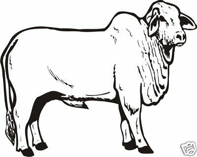 Stud Brahman Bull Sticker Decal Ute 4wd Horse Float.