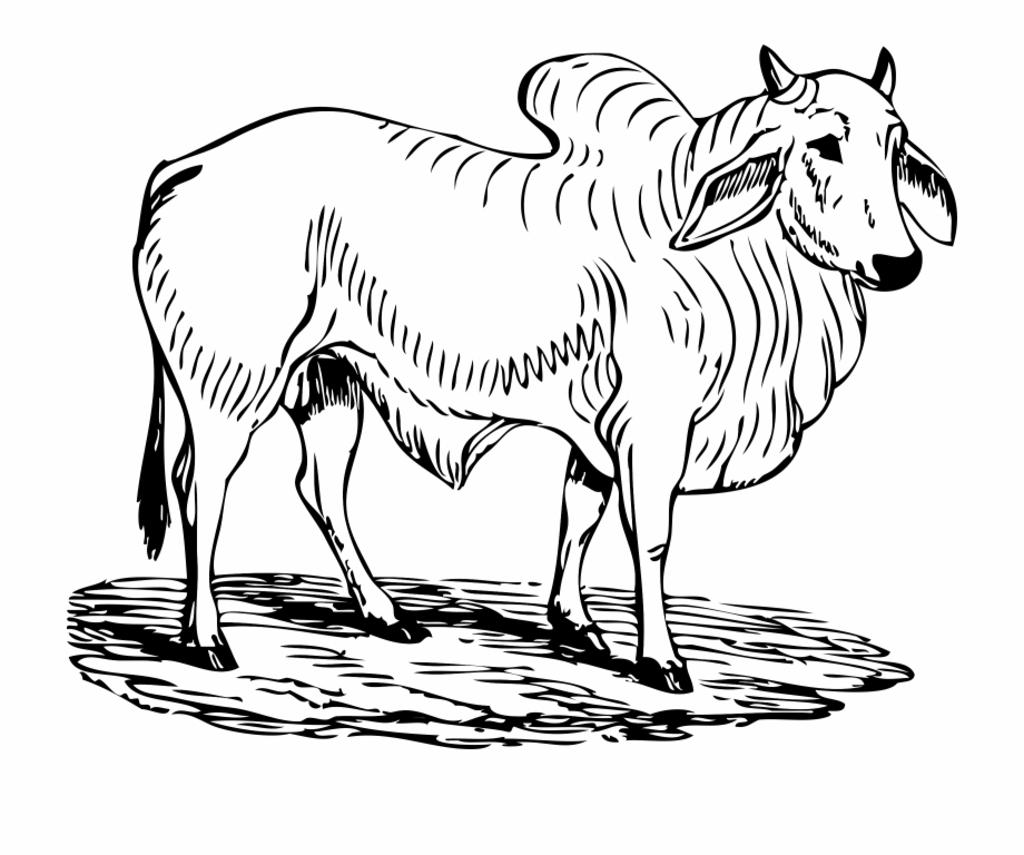 This Free Icons Png Design Of Brahma Bull.