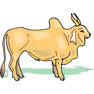 Brahma Bull clipart, cliparts of Brahma Bull free download (wmf, eps.