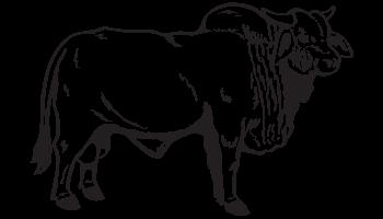 Brahma Bull Decal.