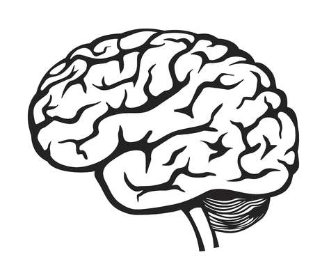 34,719 Memory Brain Stock Illustrations, Cliparts And Royalty Free.