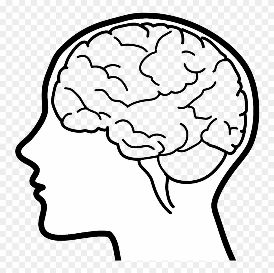 Brain Clipart Brain Drawing Clip Art.