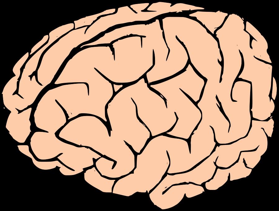 Free Cartoon Brain, Download Free Clip Art, Free Clip Art on.