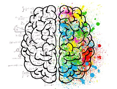 900+ of the Best Brain Pictures for Free [HD].