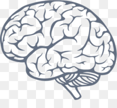 Download Free png Brain PNG & Brain Transparent Clipart Free.