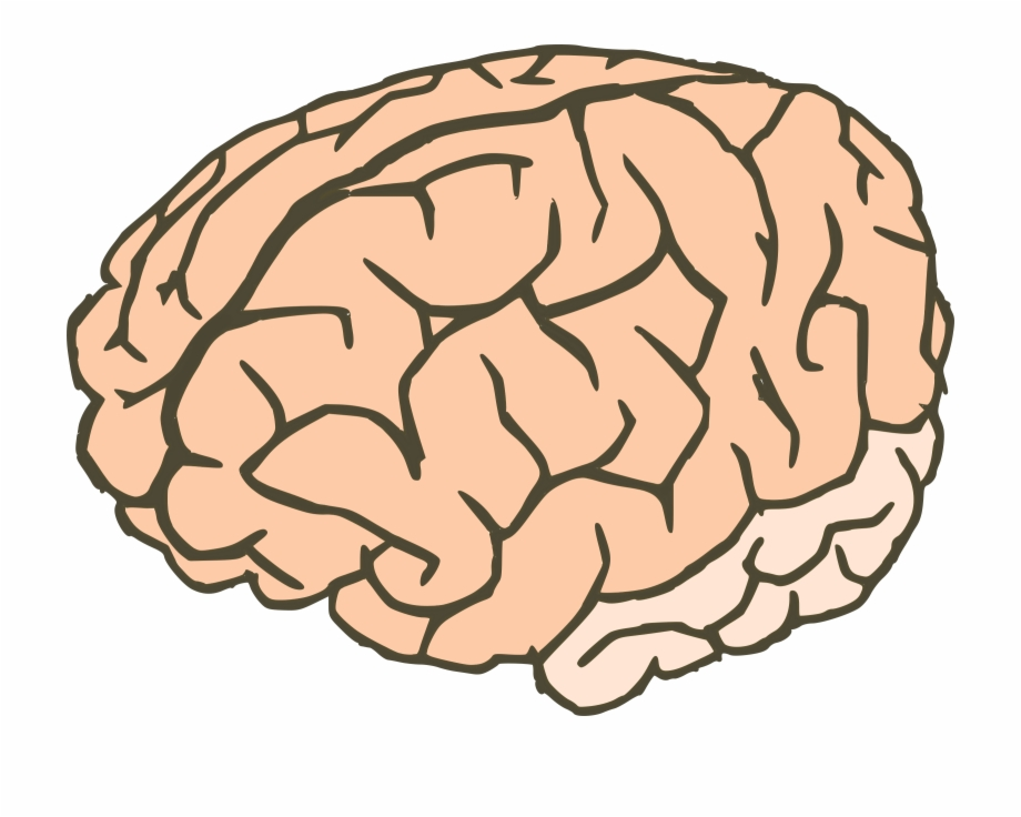 Brain Clipart Free Clipart Images Clipartwork.
