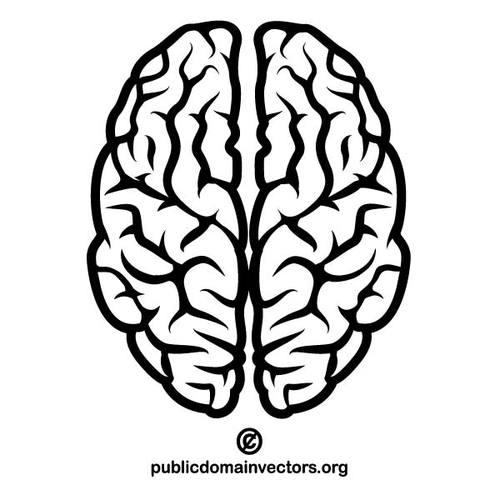 Vector image of a human brain public domain vectors cliparts.