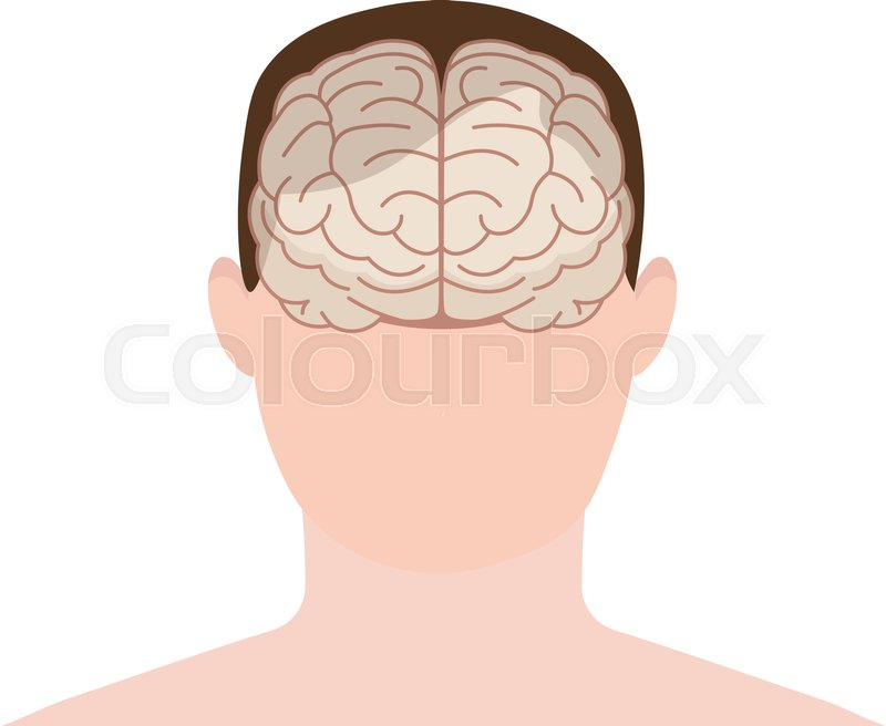 Head human, face and brain in flat.