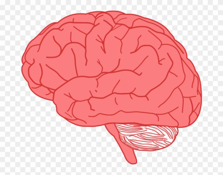 Brain Sticker.
