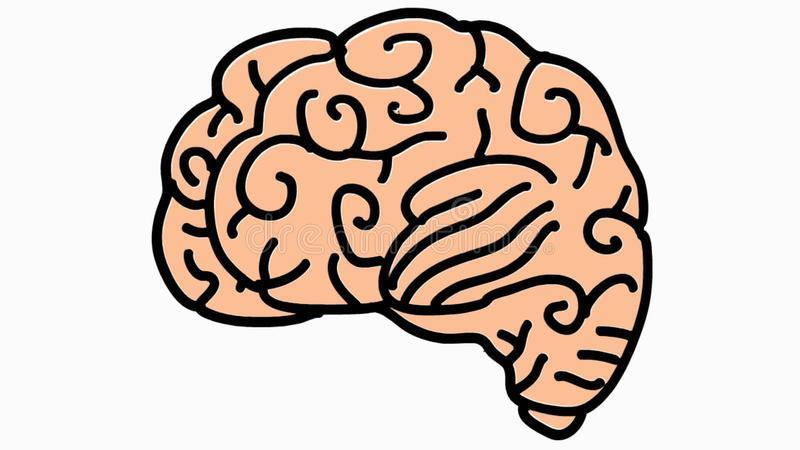 Brain clipart transparent background » Clipart Portal.