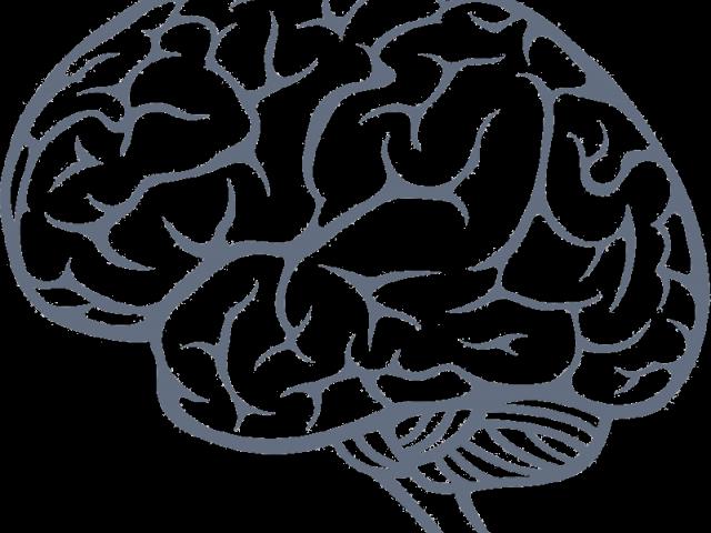 Brains Clipart Transparent Background.