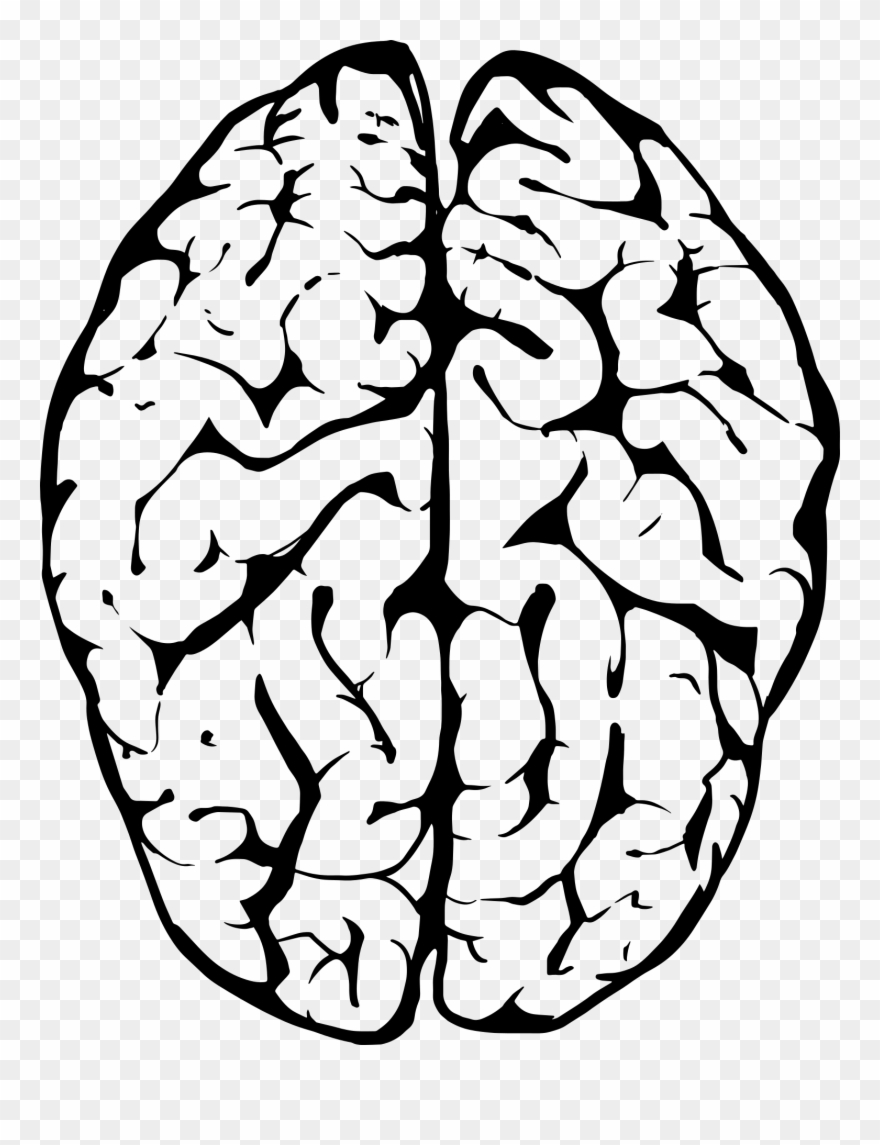 Outline Of Human Brain.