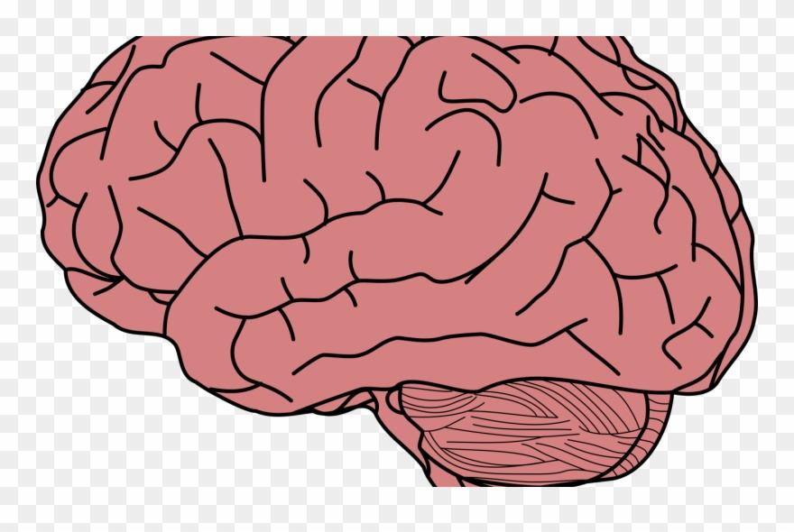 Transparent Background Brain Clipart Transparent.