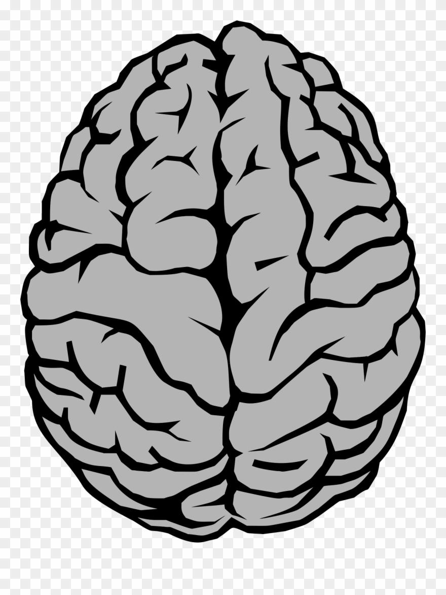 Brain Illustration Big Image Png.
