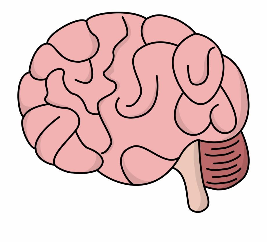 Human Brain At Getdrawings.