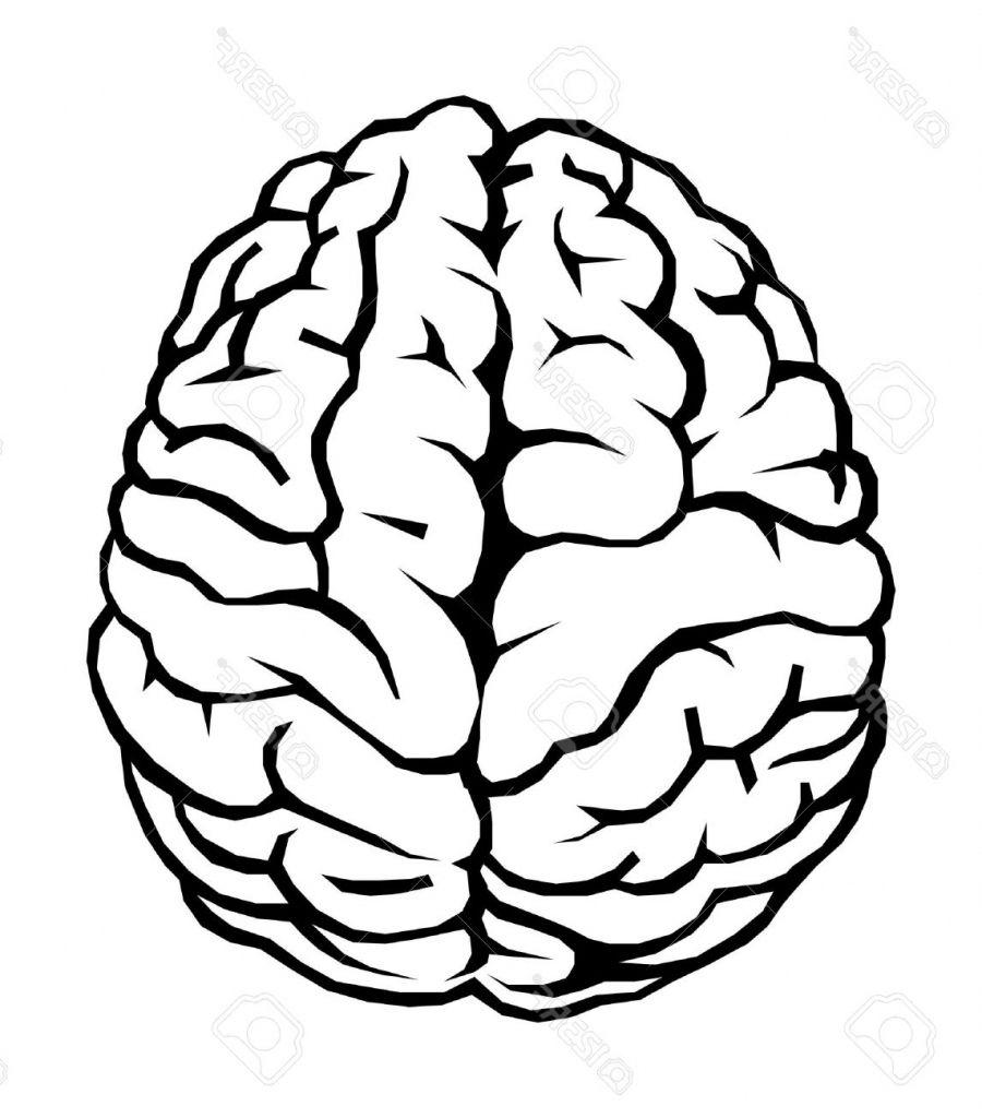 How To Draw A Cartoon Brain Brain Cartoon Drawing How To.