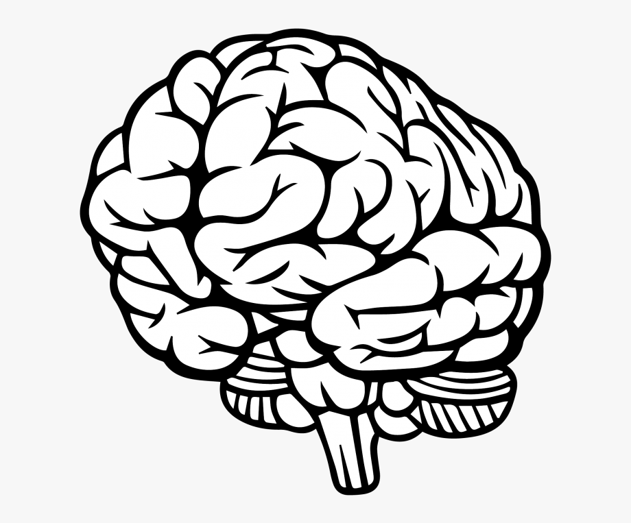 Brain Drawing 3 4 Clipart , Png Download.
