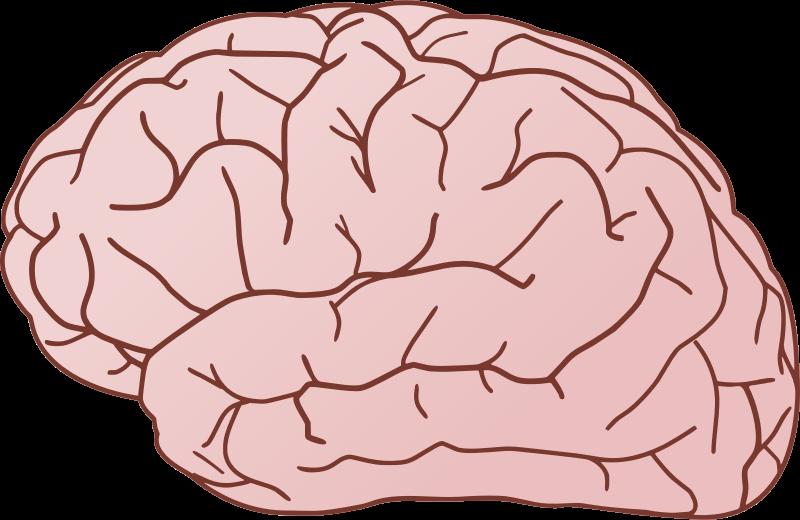 Brain Free content Clip art.