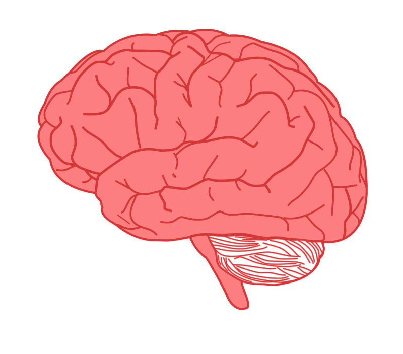 Free Clipart: Brain in profile.