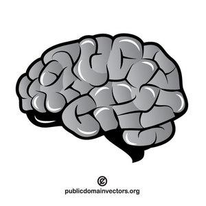 192 brain free clipart.
