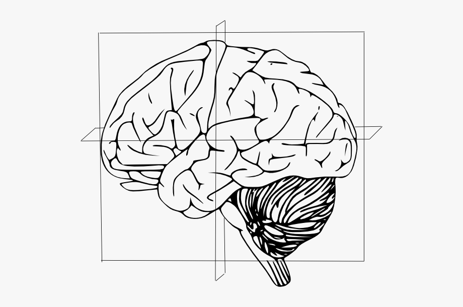 Anatomical Directions Of Brain Clip Art.