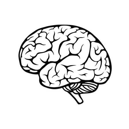 12,582 Brain Outline Stock Vector Illustration And Royalty Free.