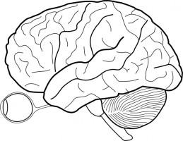 Brain clipart 8.