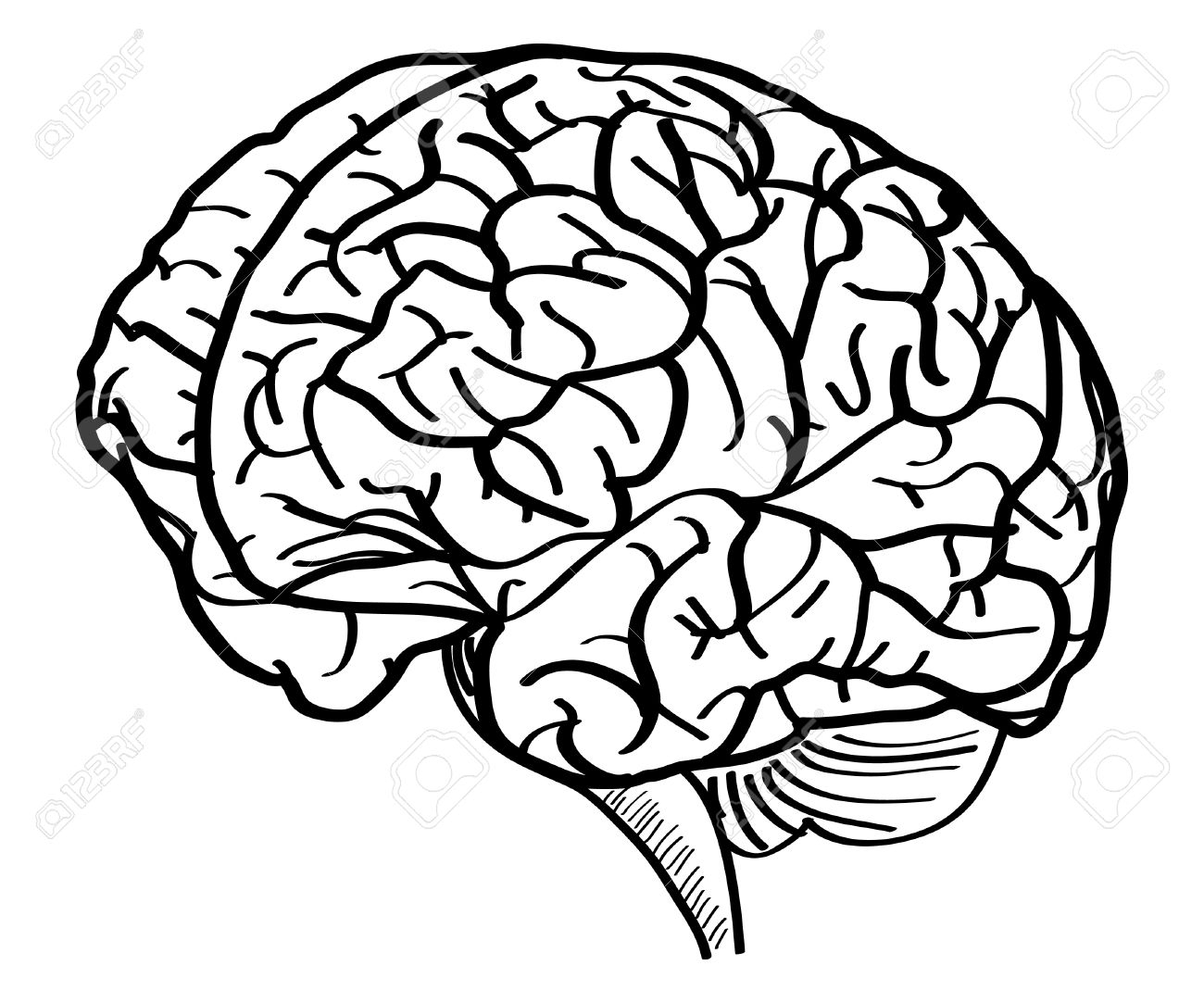 brain outline clipart black and white