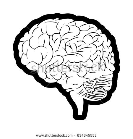 Diagram Brain Top Side Front Back Stock Vector 208211470.