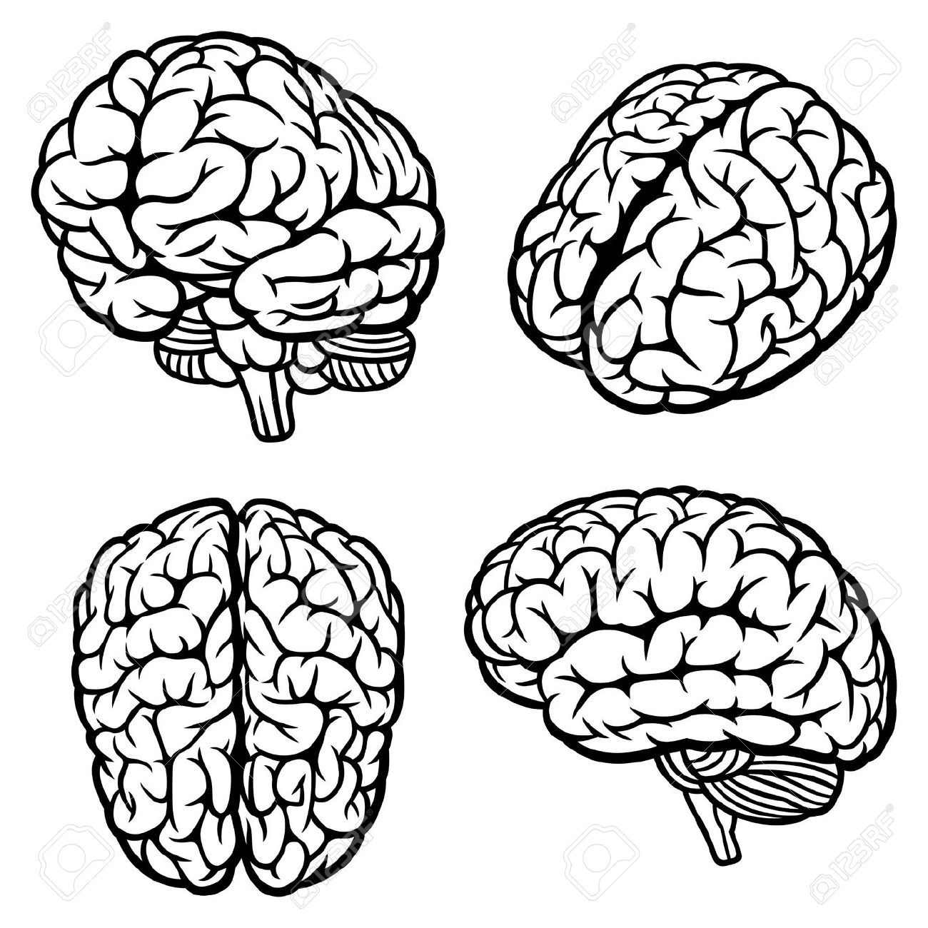 brain outline clipart black and white forward